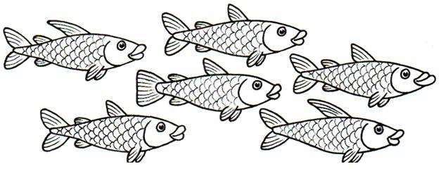 ribi_mnogo